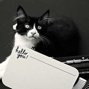 katie leamon hello you notecard in typewriter and cat