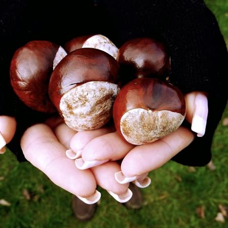 black merino fingerless mittens holding conkers