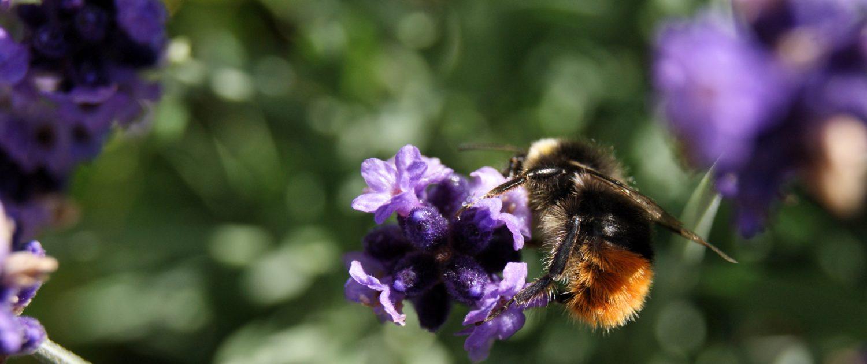 bumblebee-moustache-yellow-bee-charity-log-homeofjuniper