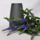dark-grey-sadie-vase-sue-pryke-homeofjuniper-homeware-purple-flowers
