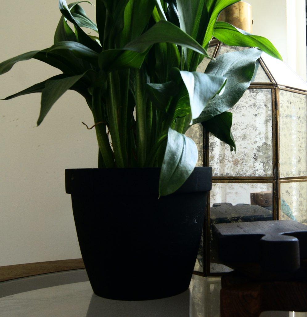 modern black trend - black plant pot