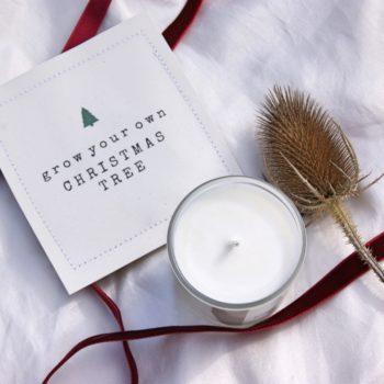 top view candle red ribbon homeofjuniper with christmas tree seed packet