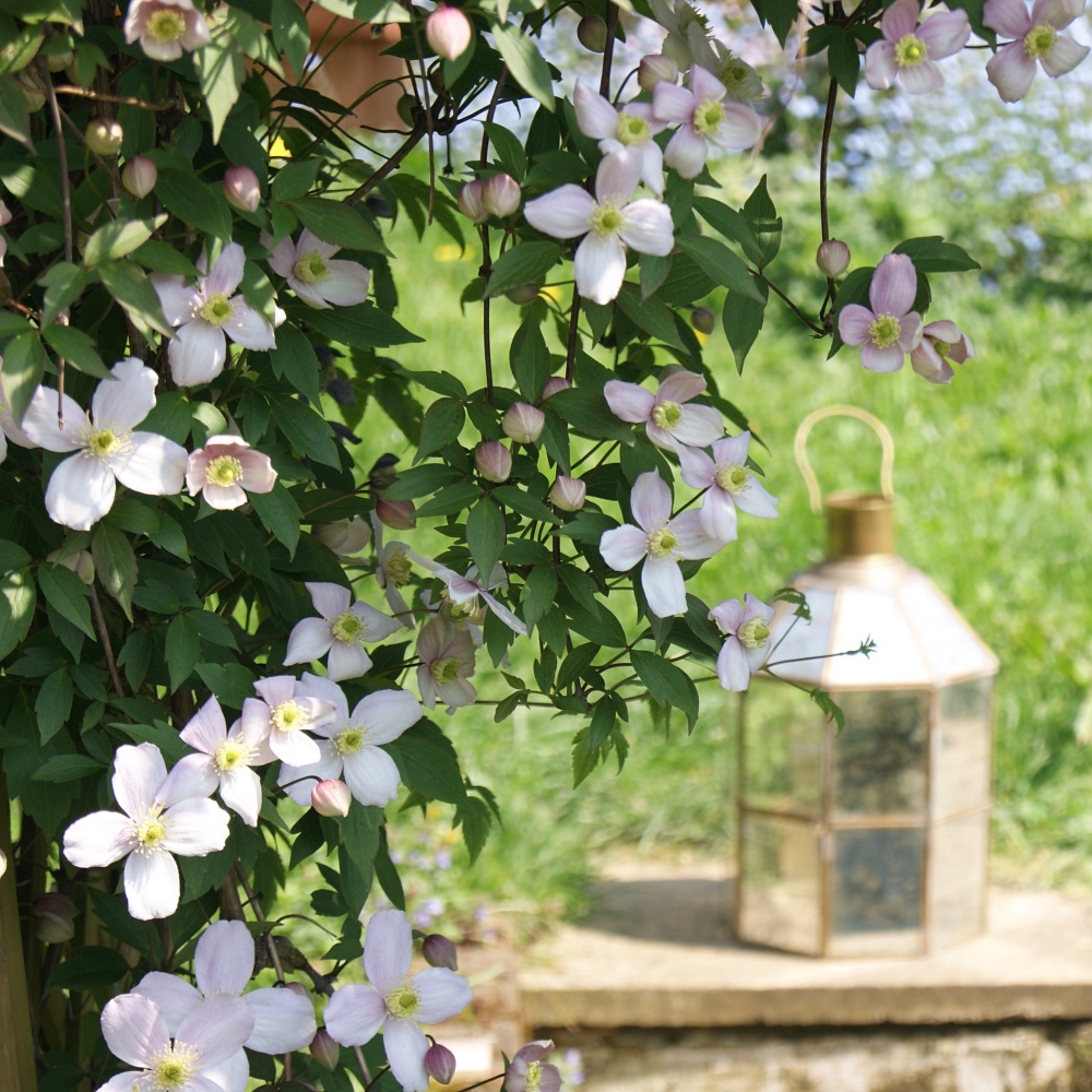 flowers-lantern-blurry-homeofjuniper-garden-time