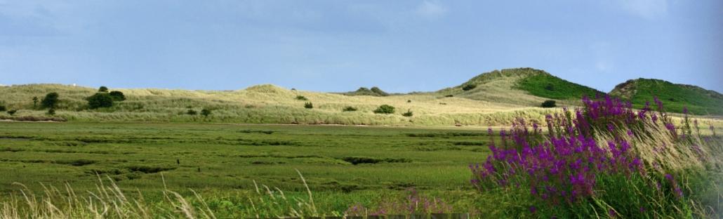 northumberland-landscape-blog-homeofjuniper