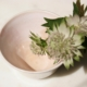 small-pink-bowl-astrantia