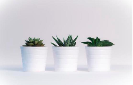 cactus-homeware-blog-homeofjuniper
