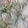 Flowers-homeofjuniper