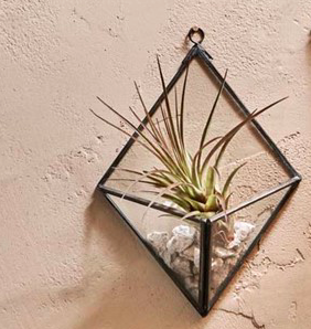 geometric-black-wall-hanging-planter-homeofjuniper-home-decor