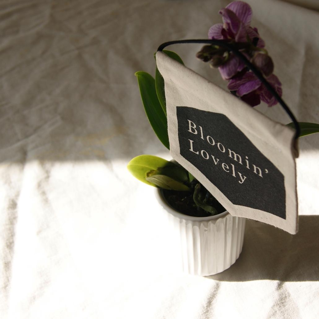 bloomin-lovely-orchid-flowers-homeofjuniper.