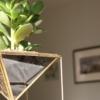 geometric-planter-succulent-homeofjuniper-tall.