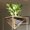 sq-succulent-planter-www.homeofjuniper.co_.uk_