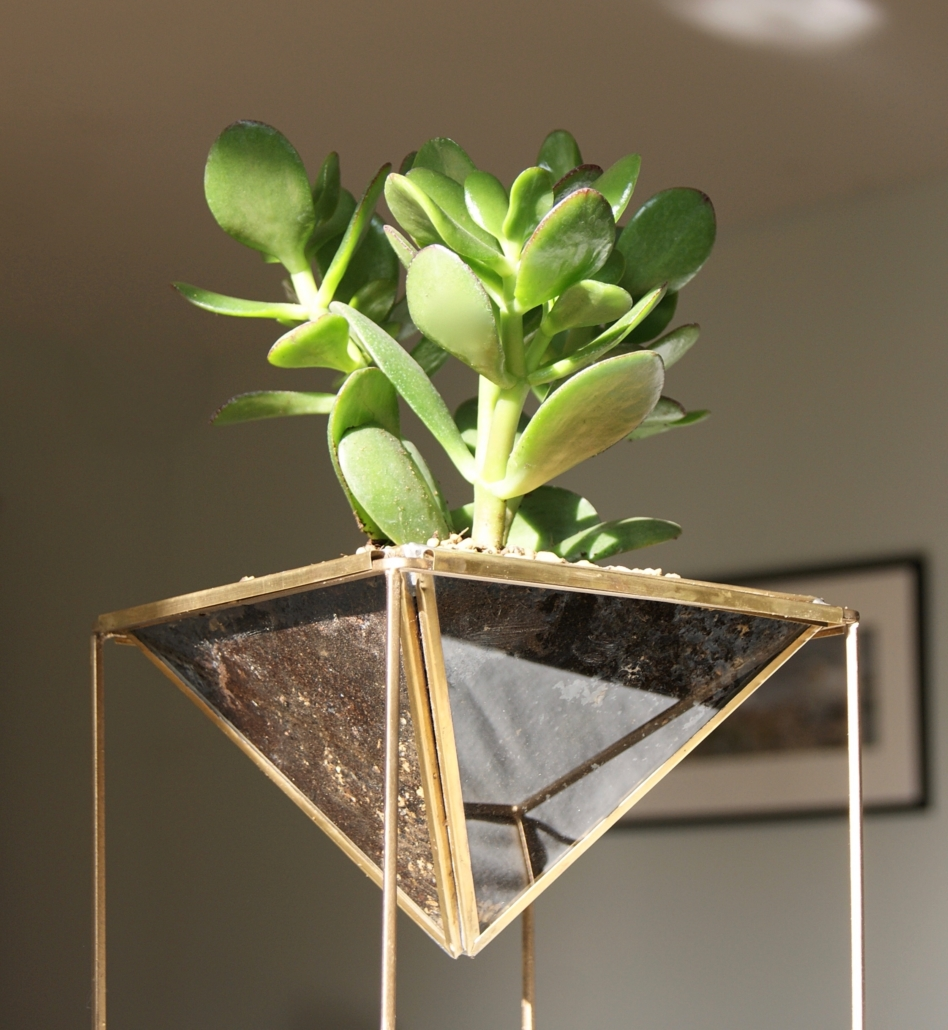 sq-succulent-planter-www.homeofjuniper.co_.uk_