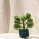 fair-trade-felt-decoration-succulent