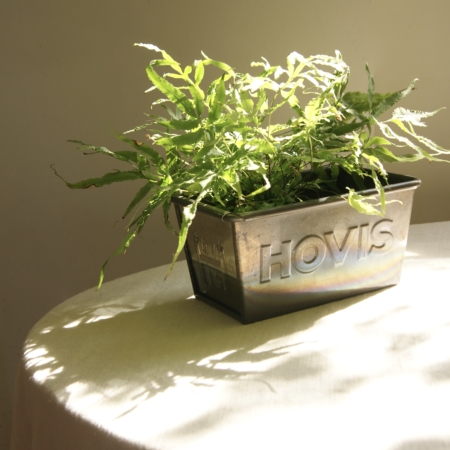 hovis-bread-tin-with-houseplant