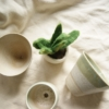 felt-succulent-and-succulent-planters
