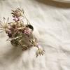 sq-astrantia-neutral-ceramic-bud-vase